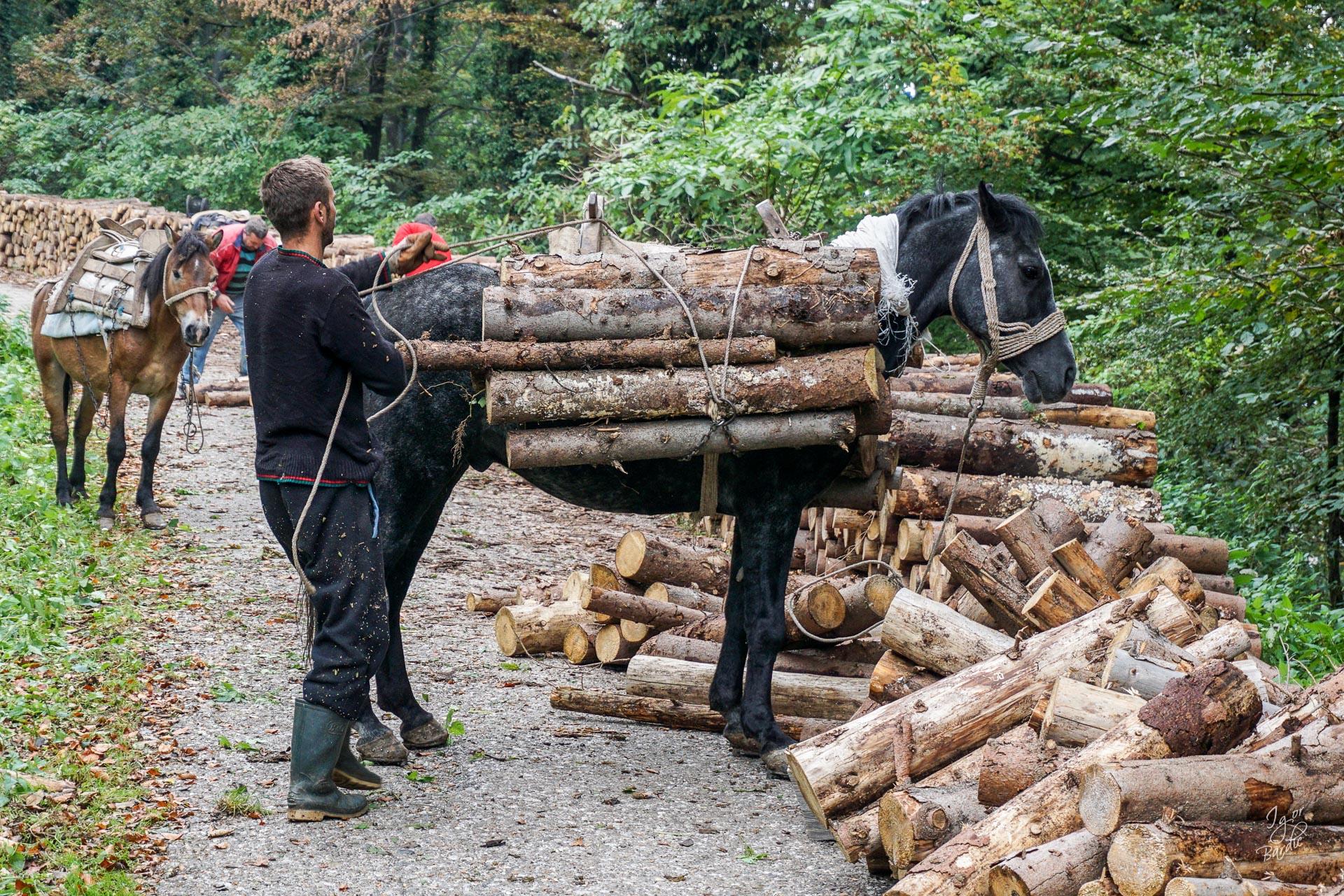 ... i izvlače drva